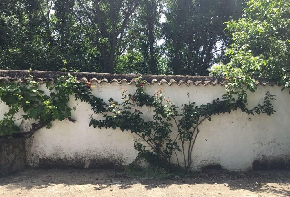 J-0159-Casa-de-Campo-in-Ronda-El-Llano-de-la-Cruz-02