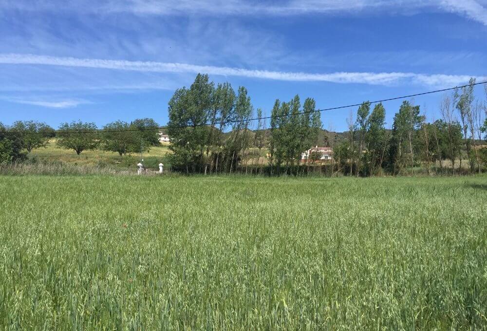 J-0159-Casa-de-Campo-in-Ronda-El-Llano-de-la-Cruz-09