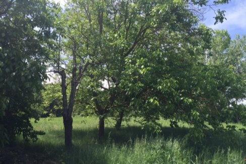 J-0159-Casa-de-Campo-in-Ronda-El-Llano-de-la-Cruz-16