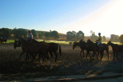 Pferdeparadies_Polo-Club_Finca_Andalusien-20