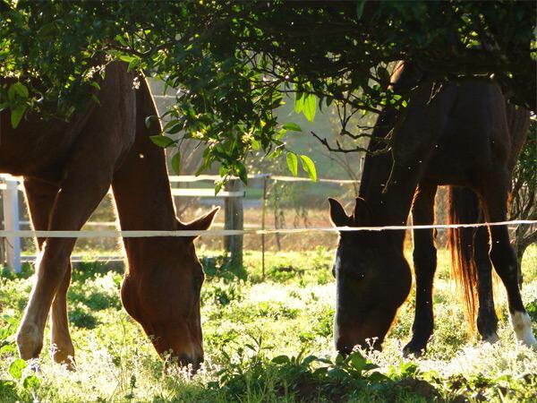 Pferdeparadies_Polo-Club_Finca_Andalusien-21