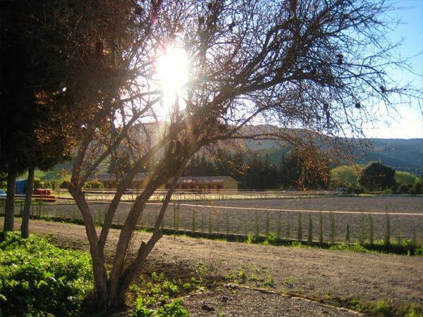 Pferdeparadies_Polo-Club_Finca_Andalusien-22